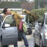 Weihnachtsbaum Transport